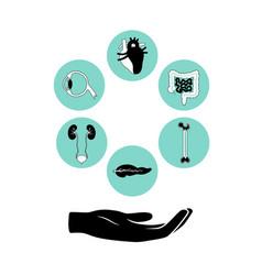 donor organs vector image