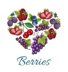 Heart shape of sketched berries vector
