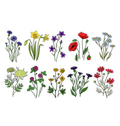Wild herbs and flowers wildflowers meadow plants vector