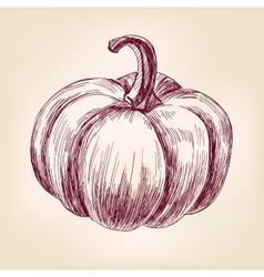 Pumpkin hand drawn llustration realistic vector image