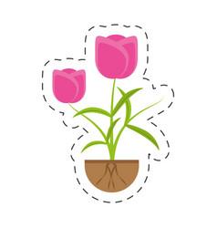 tulip flower growing plant vector image