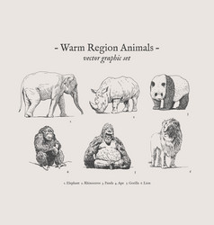 warm region animals vintage set vector image