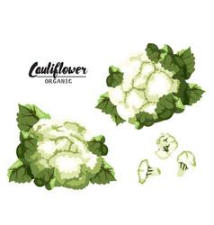 cartoon cauliflower ripe green vegetable vector image vector image