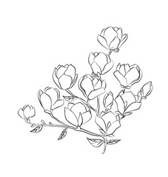 flowering branch of magnolia on white background vector image