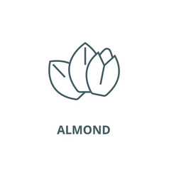 almond line icon almond outline sign vector image