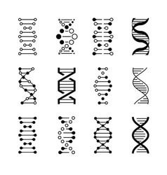 Dna icons genetic structure code molecule vector