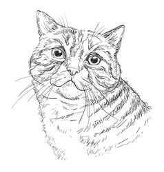 hand drawing cat 1 vector image