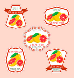 the grapefruit vector image
