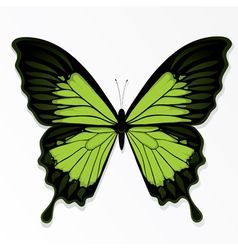 green butterfly vector image vector image