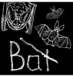 Bats Hand drawn whitw silhouettes vector image