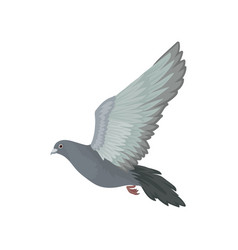 Grey urban pigeon flying side view vector