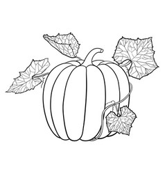 pumpkin with leaves outline icon vector image