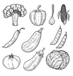 set vegetables in engraving style design vector image