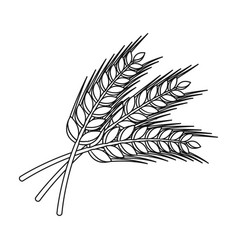 sprigs of wheat plant for brewing beer pub vector image