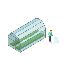 Woman working in greenhouse isometric 3d element vector