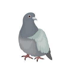 Cute grey urban pigeon bird vector