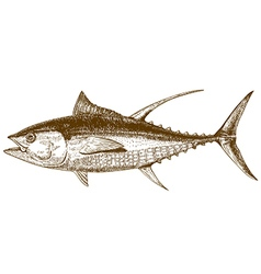 engraving tuna vector image