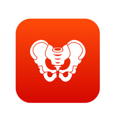 Pelvis icon digital red vector