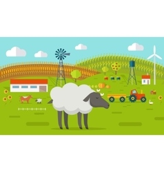 Sheep on Farmyard Concept vector