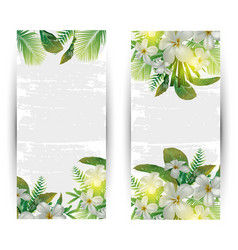 tropical plant banner vector image