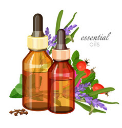 Essential oils made of natural wild herbs in glass vector