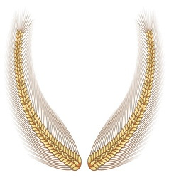 Gold wheat laurel vector