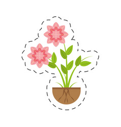 Petunia flower nature growing vector