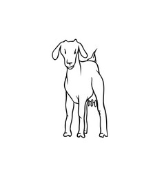 sketch farm animal young goat with udders vector image
