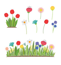 spring flowers growing in garden tulips vector image
