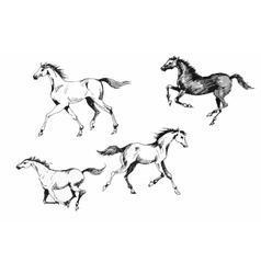 Horses collection vintage vector image