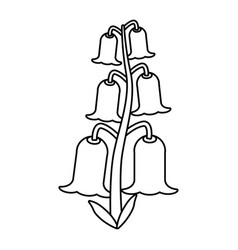 bell flowers flora botany thin line vector image