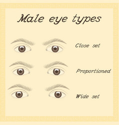 various male eye types vector image
