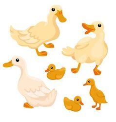 Tree white adult ducks with tree ducklings vector image