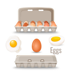 eggs in shell inside cardboard container and vector image