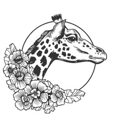 giraffe head animal engraving vector image