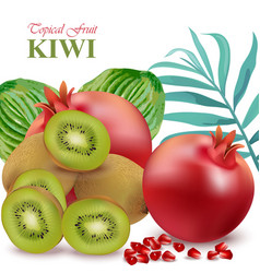 tropical paradise fruits avocado papaya kiwi vector image