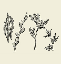 hand drawn herbal flowers isolated vector image vector image