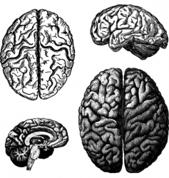 Brain illustrations vector