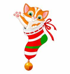 Christmas cat in sock vector