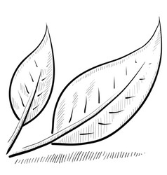 doodle leaves green nature vector image