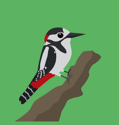 Great spotted woodpecker vector