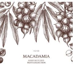 Macadamia design hand drawn food template nut vector