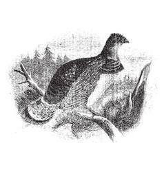 Ruffed grouse vintage vector