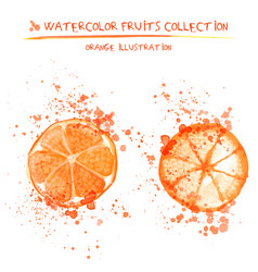 set of watercolor oranges vector image