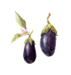 Watercolor hand drawn eggplant vector