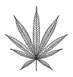 marijuana leaf in engraving style design element vector image