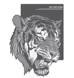 raging tiger vector image