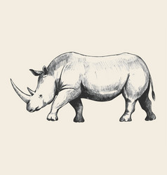 Rhino sketch vector