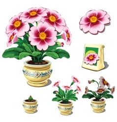 Seeds in bag and stages of growth potted flowers vector image