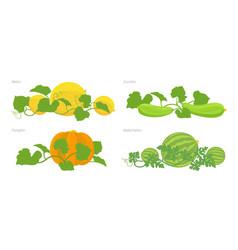 Set of cucurbitaceae plants pumpkin melon and vector